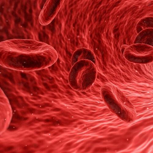 Circulação sanguínea: guia atualizado para sua saúde